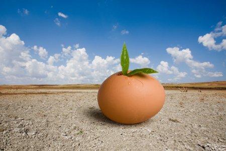 3 boyutlu yumurta resmi